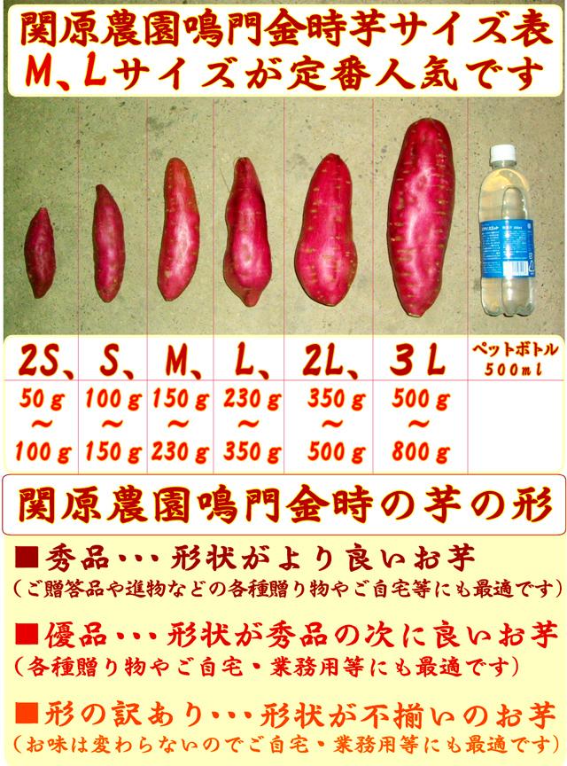 関原農園(せきはらのうえん)の鳴門金時(なるときんとき)さつまいもの大きさ・形状のサイズ表(目安)