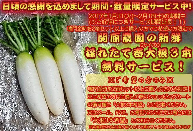 日頃の感謝を込めて関原農園の春大根の期間・数量限定無料サービス!